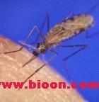 Current  Biology:按蚊气味感知系统