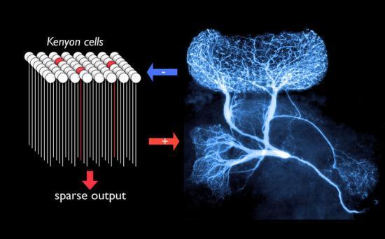 多极神经元红蓝手绘图片