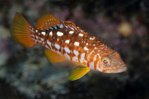 赏鱼类濒临灭绝