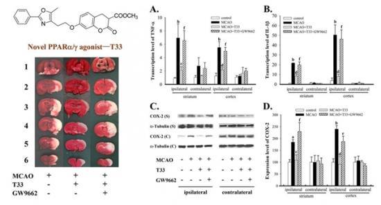 T33在缺血性脑中风中具抗炎作用
