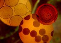 全球五大干细胞治疗中心