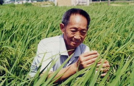 湖南启动第四期超级杂交稻亩产1000公斤攻关