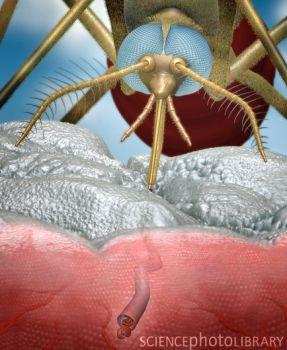 日本借鉴蚊子叮人研发无痛注射针